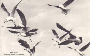 Delaware Bethany Sea Gulls Albertype