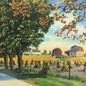 Postcard Tillamook Oregon Greetings Vintage 40s Farm Scene Curt Teich Posted
