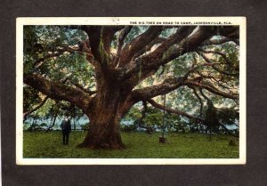 FL Big Tree Road To Camp Jacksonville Florida Vintage Postcard 1920