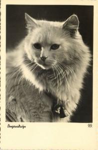Cat Postcard (1930s) RPPC (2)