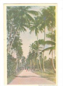 Palm Tree-lined Road, Trinidad, 10-20s