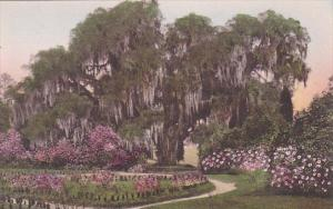 The Great Oak From The Rose Garden Middleton Place Gardens Charleston Carolin...