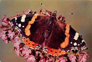Red Adm. Butterflies Unused