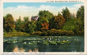 Lily Pond at Maplewood Park, Rochester, New York - WB