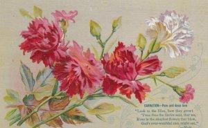Carnation Flowers , 1900-10s