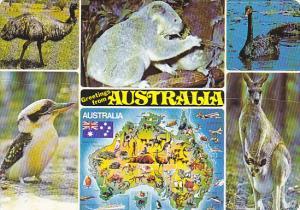Greetings From Australia Map Koala Bear Emu Black Swan Kookaburra Kangaroo