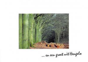 Netherlands Forest Logs Wald En een groet uit Henzelo