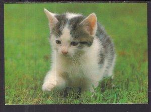 Cat BIN