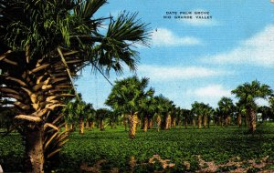 Texas Lower Rio Grande Valley Typical Date Palm Grove 1951