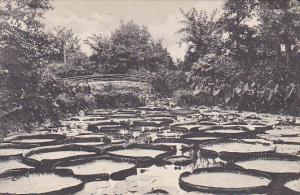 Minnesota St Paul Lily Pond Como Park