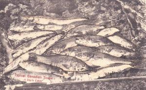 A Day's Catch, Fish, Typical Canadian Scene, Canada, 1900-1910s