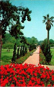 Long Beach CA Flowered Pathway Bixby park Postcard unused (20135)