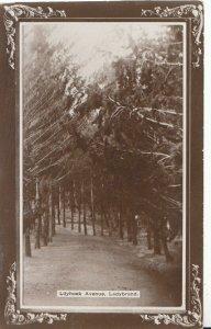 South Africa Postcard - Lilyhoek Avenue - Ladybrand - Ref 6142A