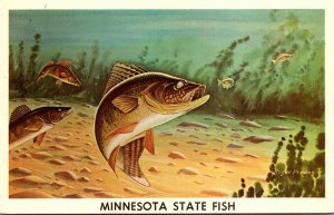 Minnesota State Fish The Walleye