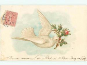 foreign Pre-1907 Postcard LARGE WHITE DOVE BIRD CARRIES ROSE FLOWER AC2294