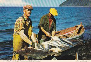 Fishermen preparing catch of Gaspe Cod for market,  Mont. St. Pierre,  Gaspe,...