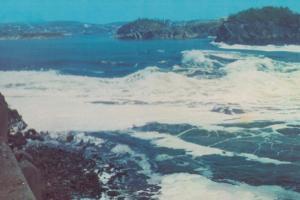 Reversing Falls Saint Johns Canada Canadian Postcard