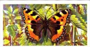 Brooke Bond Tea British Butterflies No 21 Small Tortoiseshell