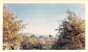 Shuturah, Lebanon Postcard, Carte Postale Snow capped Mt Hermon 9,232 Ft Elev...