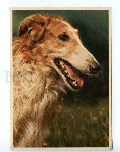 218620 GERMANY Borzoi dog old postcard