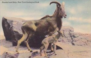 New York City Zoological Park Aoudad and Baby
