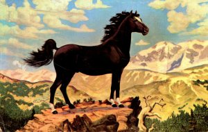 Horses Black Stallion High In The Rockies 1957