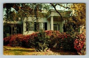 Natchez MS-Mississippi, Green Leaves, Chrome Postcard