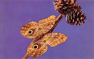 Owl Butterfly South America Unused