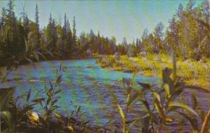 Canada Alberta Sundre Camp Evergreen Fallen Timber Creek