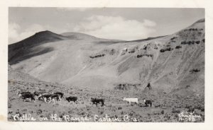 RP: Cattle on the Range , Eastern OREGON , 30-40s