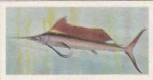 United Tobacco South Africa Vintage Trade Card African Fish 1937 No 29 Sailfish