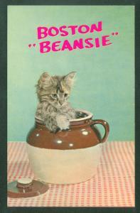 BOSTON BEANSIE Kitten in Bean Pot Picture Postcard Massachusetts