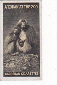 Carreras Cigarette Card Kodak At Zoo 1st Series No 39 Gelada Baboon
