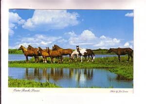 Outer Banks Ponies, Ocracoke, North Carolina, Photo Jim Doane