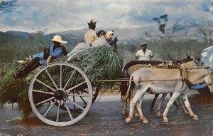 Homeward Bound! Jamaica 1957