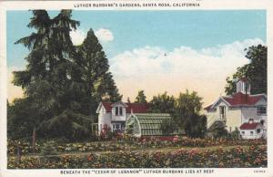 Scenic view, Luther Burbank's Gardens, Santa Rosa, California, PU_1939