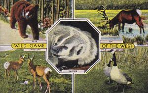 Wild Game Of The West Bear Elk Antelope Geese and Badger
