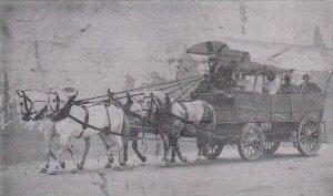 California Buena Park Bill Higdon Wagon Boss Horse & Wagon Team