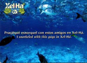 Mexico Xel Ha Snorkeling