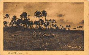 Libya Oasi Tripolina Verso Sera Soffia il Ghibili Sheeps Postcard