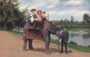 Children Riding Indian Elephant Gunda New York Zoological Park