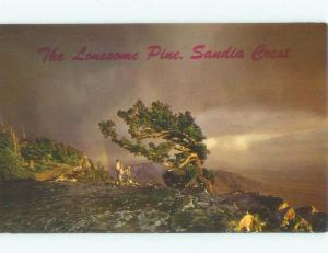 Unused Pre-1980 LONESOME PINE TREE Albuquerque New Mexico NM E6718