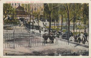 NEW YORK CITY, PU-1920 ; Animals in Central Park