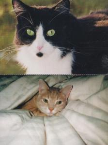 PDSA Cat Rescue Sleeping in Bed Under Pillow 2x Vintage 1970s Postcard s