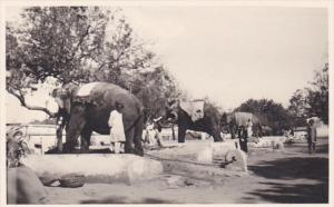Indian Elephants and Their Handlers Photo