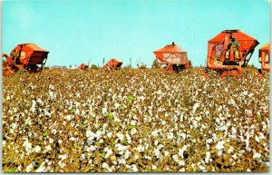 Dothan, Alabama Postcard Cotton Picking the Wiregrass Area Agriculture c1950s