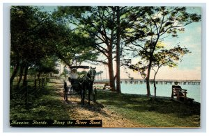 Early Manatee Florida FL Postcard Along the River Road Horse Carriage