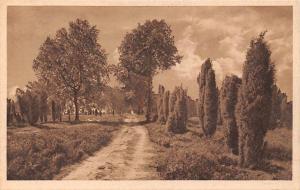 Lueneburger Heide Wanderweg durch einsame Heide