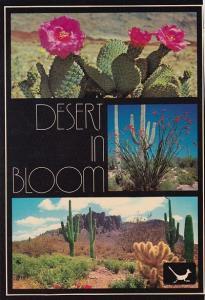 The Desert In Bloom Phoenix Arizona