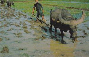 Rice Cultivation in Thailand, Plowing with Buffaloes, Thailand, PU-1973